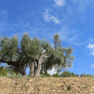Apadrina una olivera