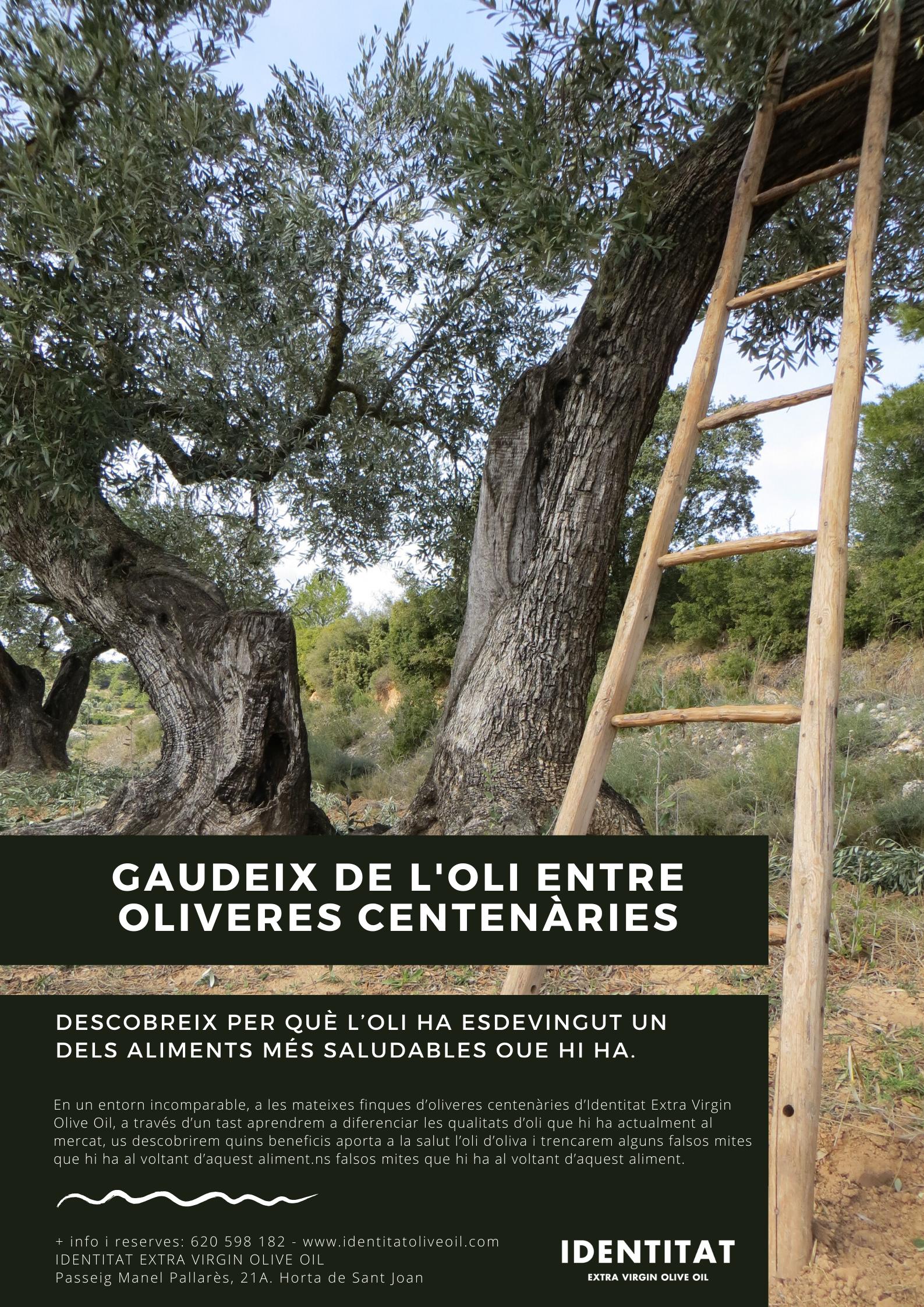 Gaudeix oli oliveres